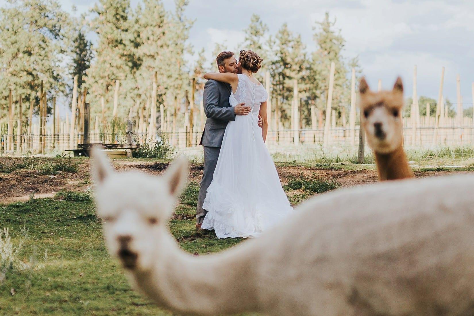 Bottega Farm Inn Wedding Kelowna BC Photographer Alpacas