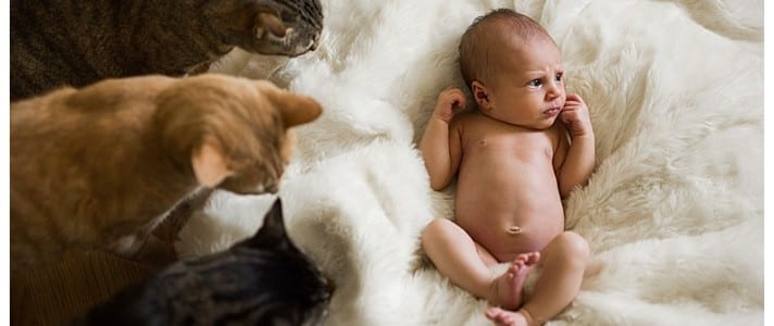 Baby with Cats ©BARNETT PHOTOGRAPHY